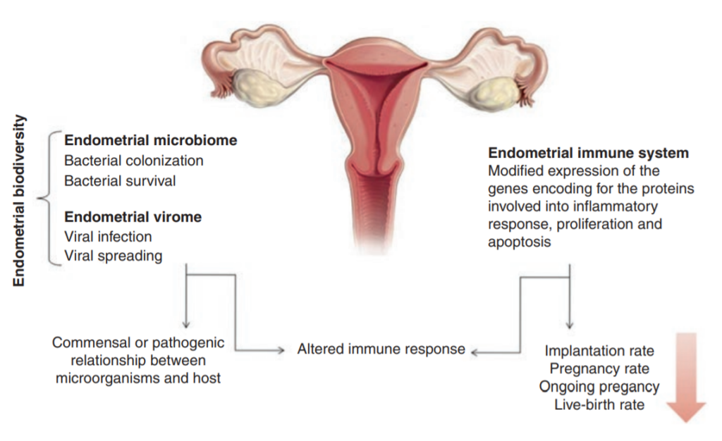How reproductive tract microbiome influences fertility and live birth rates